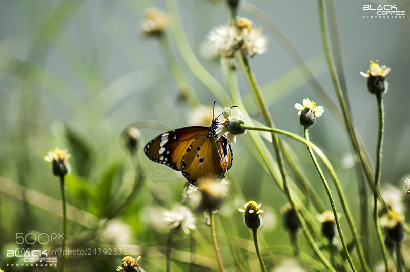 Photograph Catch You by Ajith Mathew on 500px