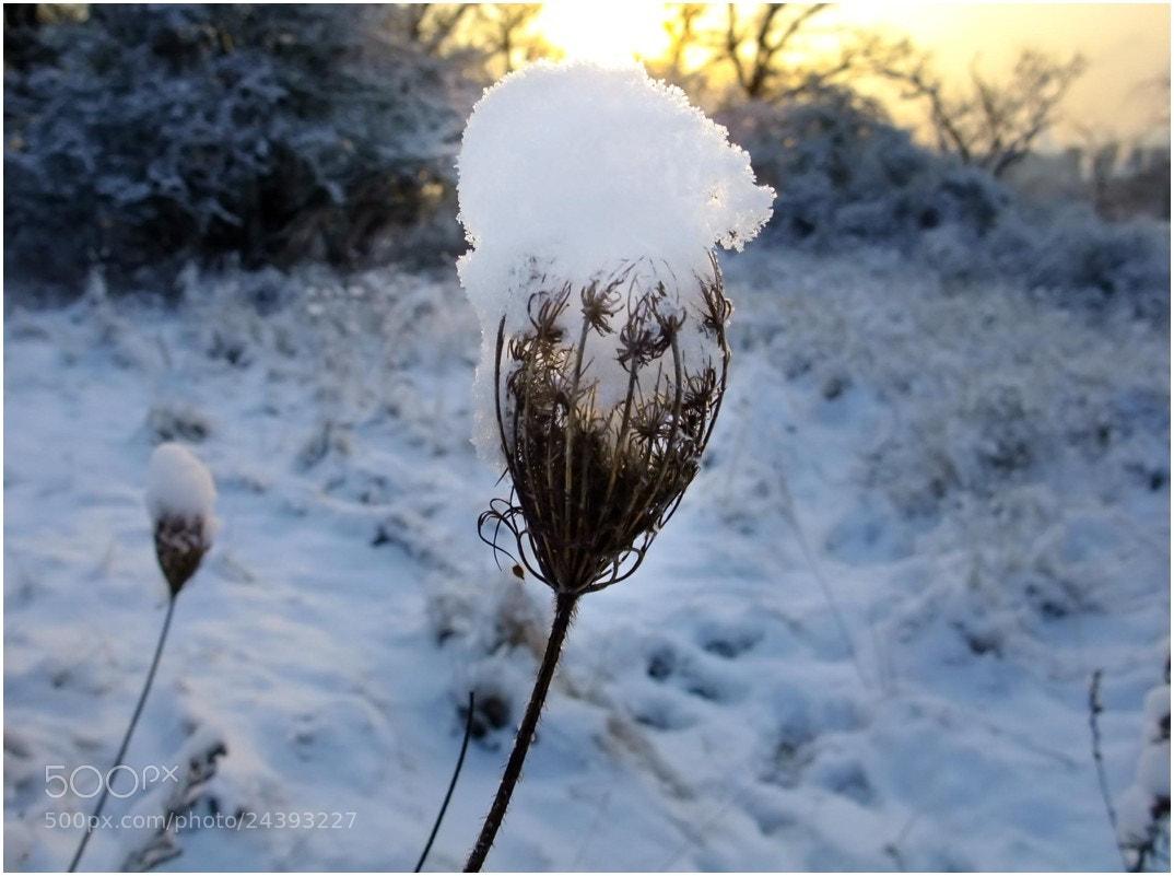 Photograph Winter Flower by Ulrich Fleischer on 500px