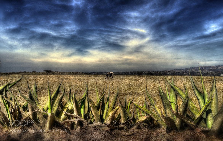 Photograph Mexican Cliché 11 by Erick Garcia Garcia on 500px