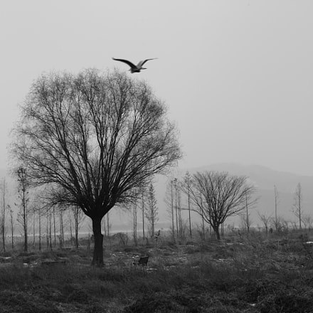 Trees and Bird, Canon EOS-1DS MARK III, Canon EF 80-200mm f/2.8L