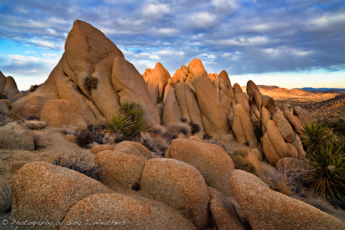 Photograph Rock Garden by Gary Weathers on 500px