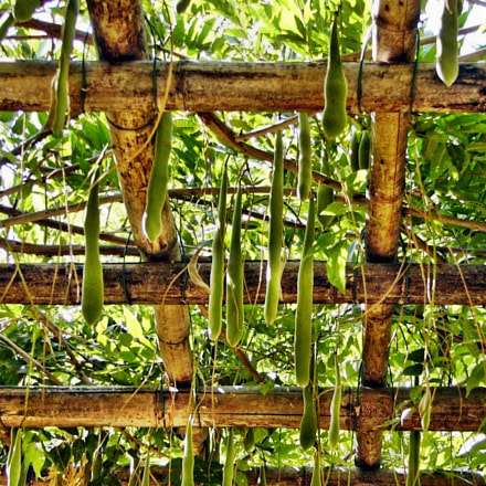 bambou tout faire, Panasonic DMC-FZ2