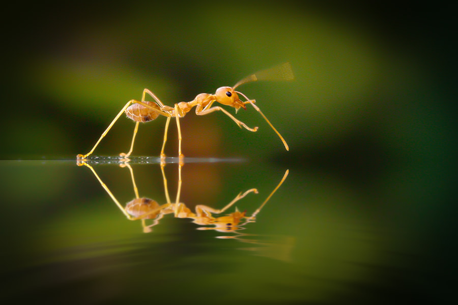 Ant: on The Wave by teguhs on 500px.com