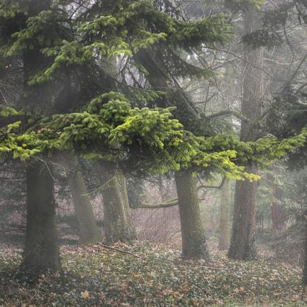 Ködben