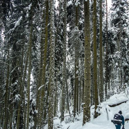 Borjomi-Kharagauli national park #4, Sony DSC-W320