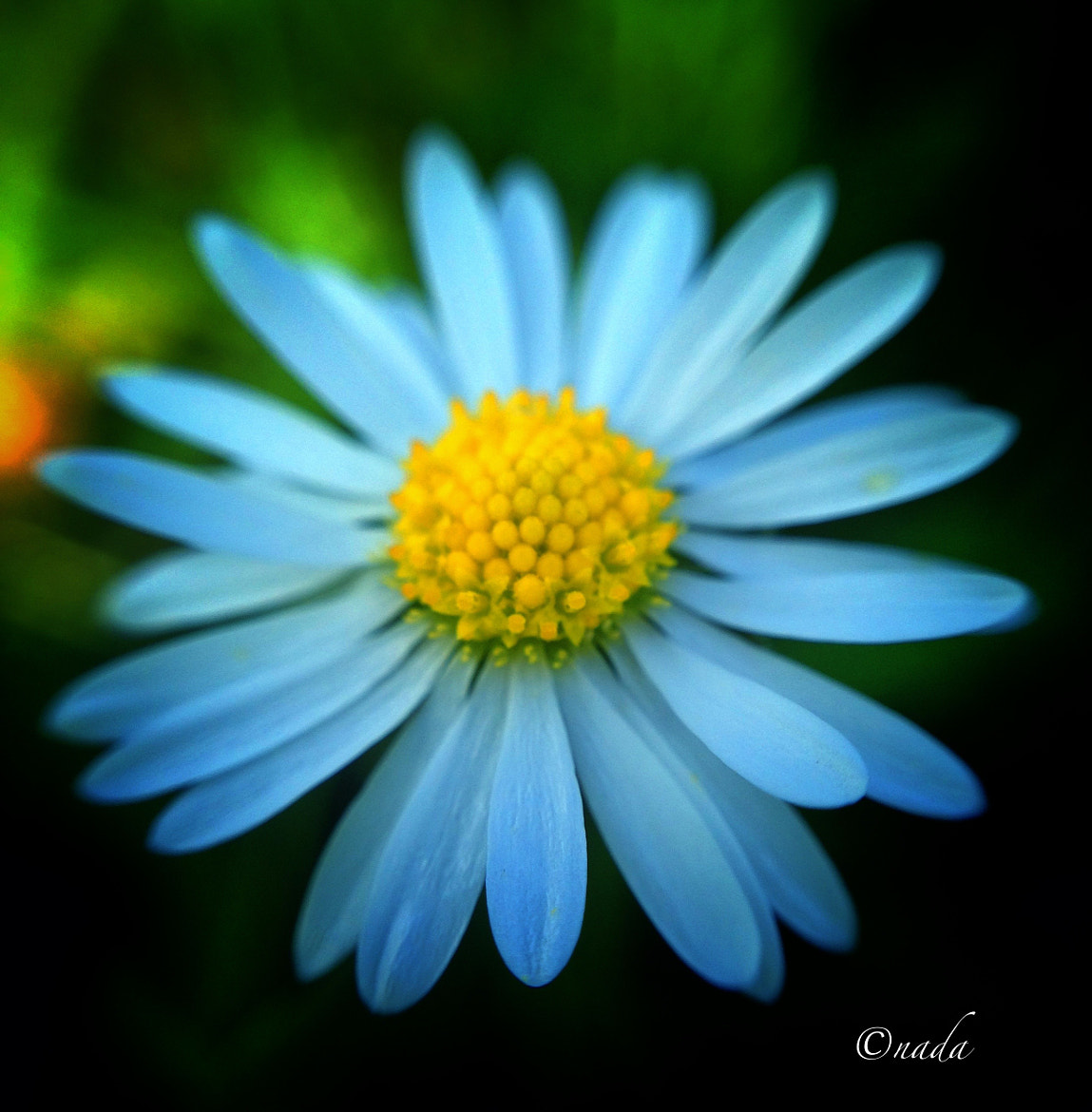 Photograph Forgotten flower by Nada Leva on 500px