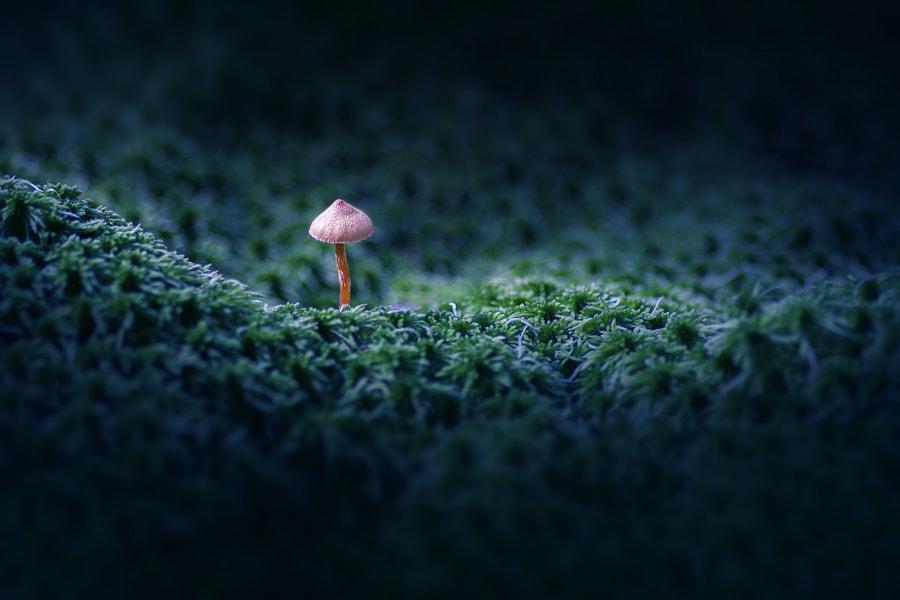 A mushroom by Igor Alekseev on 500px.com