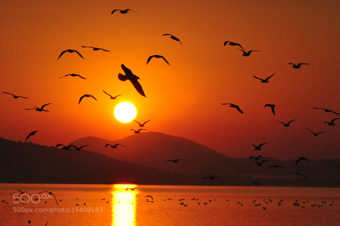 Photograph Morning Flight by Jorge Cardenas on 500px