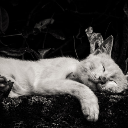 Slumbering Cat, Fujifilm FinePix Z90