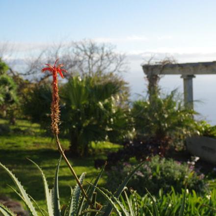 Madeira Garden, RICOH PENTAX K-3 II, smc PENTAX-DA 17-70mm F4 AL [IF] SDM