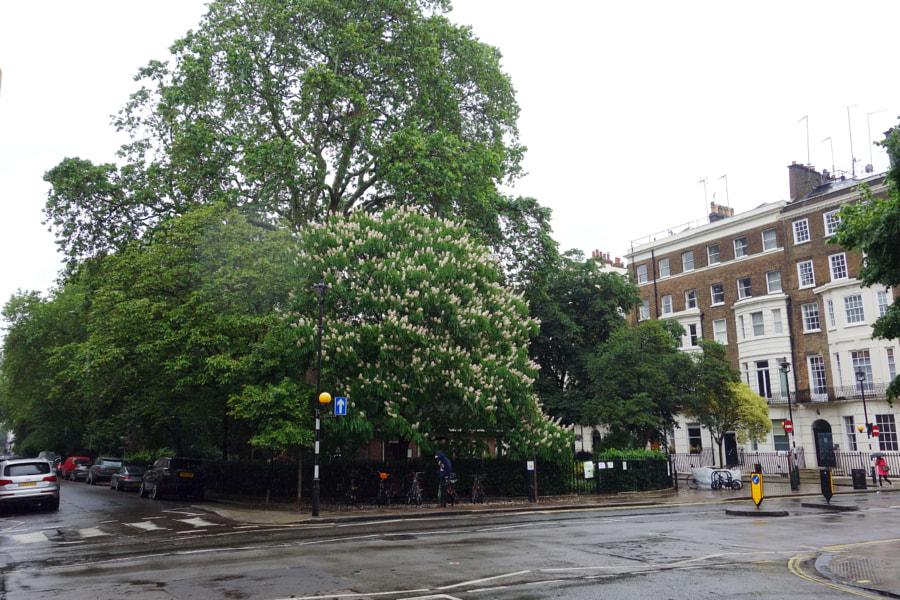 Montagu Square, London by Sandra  on 500px.com