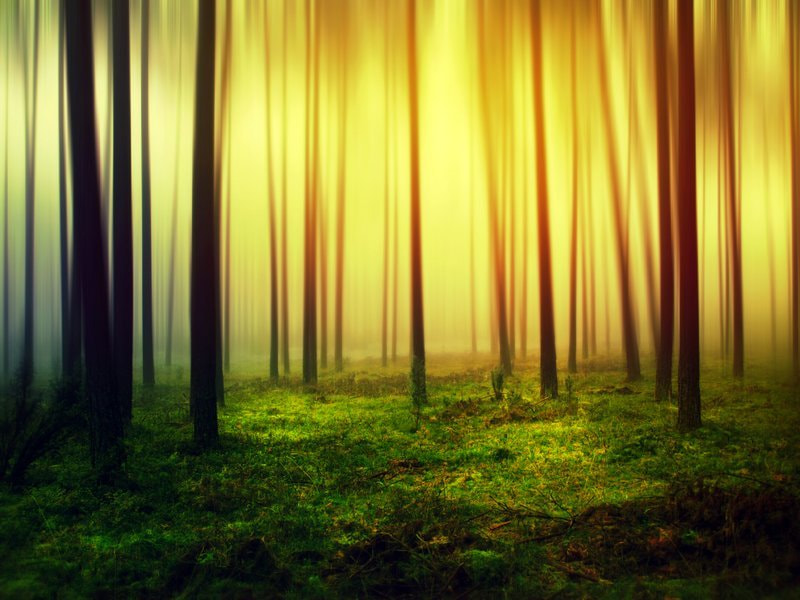 Photograph forest by Barbara Florczyk on 500px