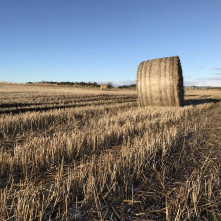 Bale of Hay in field in front of Blue Sky