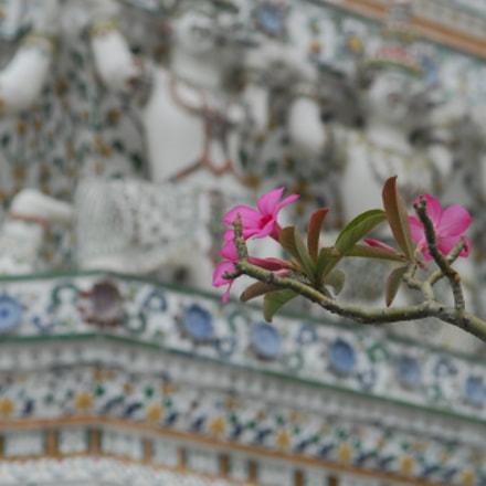 Wat Arun, detail, Nikon D200, Sigma 24-70mm F2.8 EX DG Macro