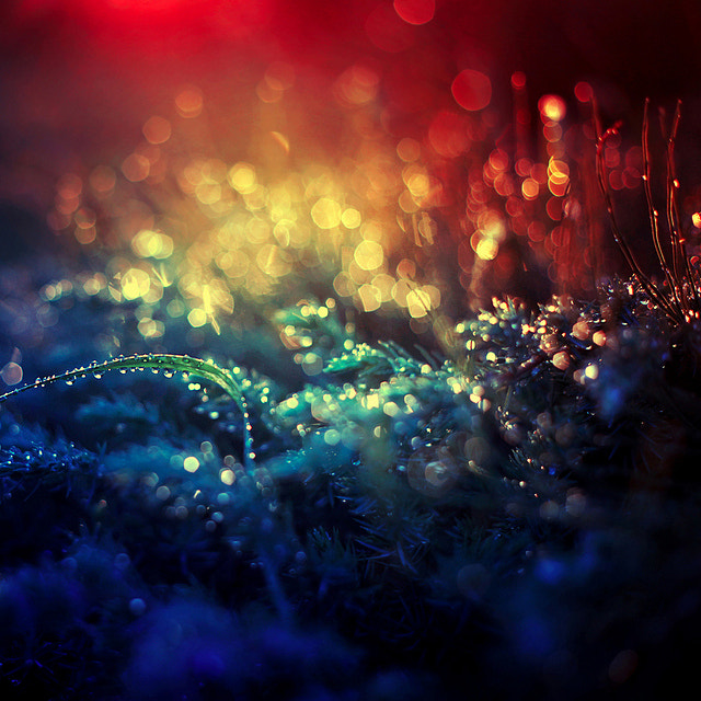 Photograph Magical by Barbara Florczyk on 500px