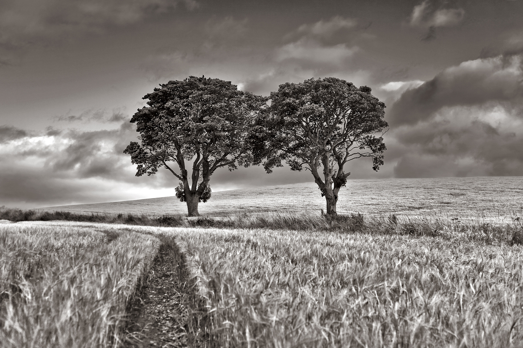 Photograph Trees in cornfield  by Hans Kwaspen on 500px