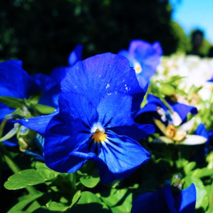 Botanical Garden flower, Sony DSC-W580