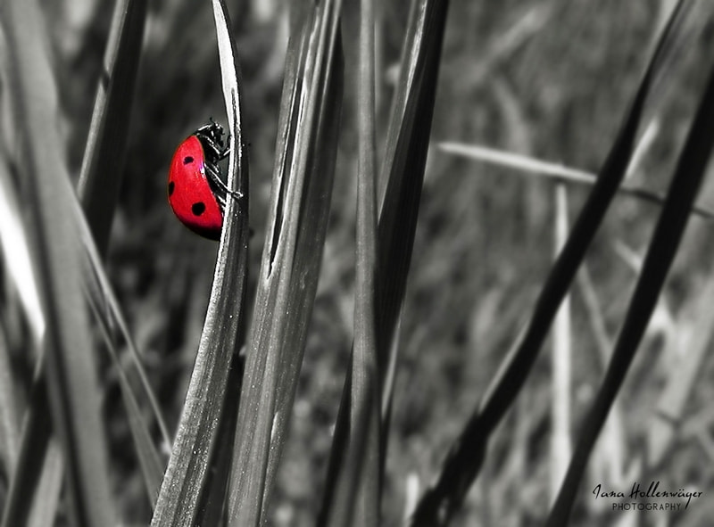 Photograph Ladybird by Ju & Ja Photography on 500px