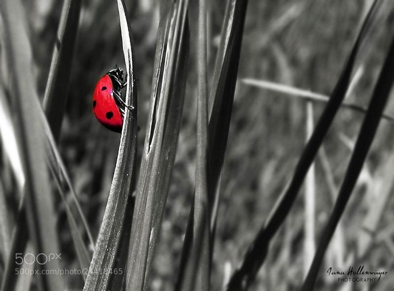 Photograph Ladybird by Ju & Ja Photography on 500px