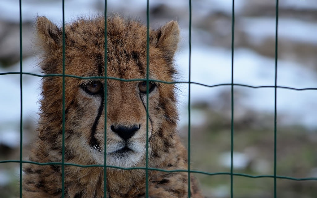 Photograph Sad jag by Michel L'HUILLIER on 500px