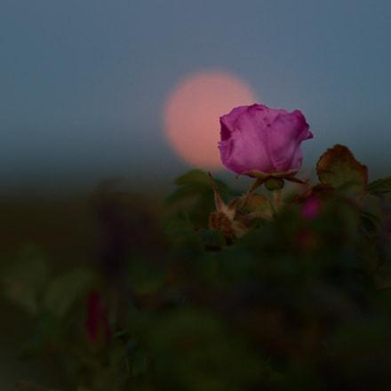 North of light #VI, Nikon DF, AF Nikkor 85mm f/1.4D IF