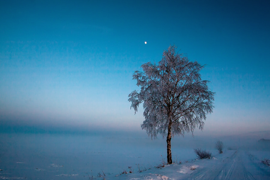 Photograph in blue by Dgs  on 500px
