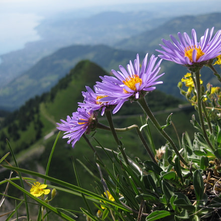 Blossoms above Lake Geneva, Canon DIGITAL IXUS 90 IS