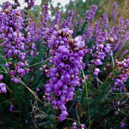 flores, Fujifilm FinePix SL245