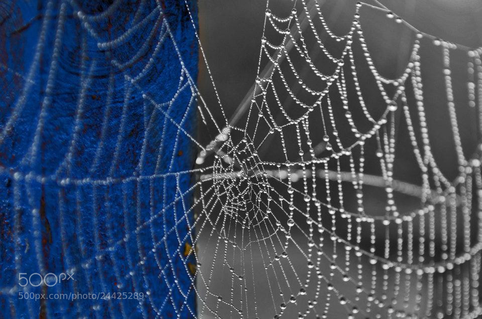 Photograph Post and cobweb by Emma Charlton on 500px