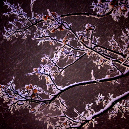 Winter Branches, Pentax K-X