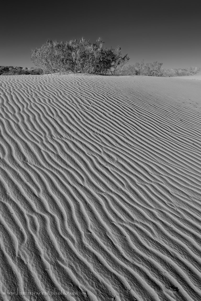 Photograph Creosote Dune by Jason Odell on 500px