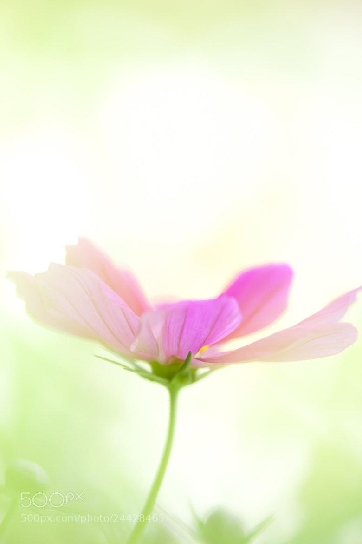 Photograph Dream of midday by Hideaki Yoshida on 500px