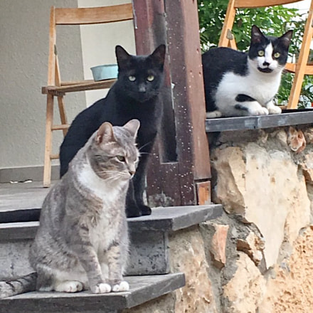 J.G., Oops and Pupic, the three Musketeers