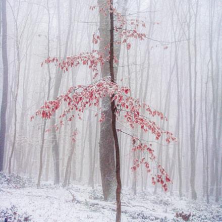 deep in forest, Sony DSC-T70