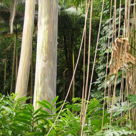 Hawaiian tropics., Canon POWERSHOT SD300