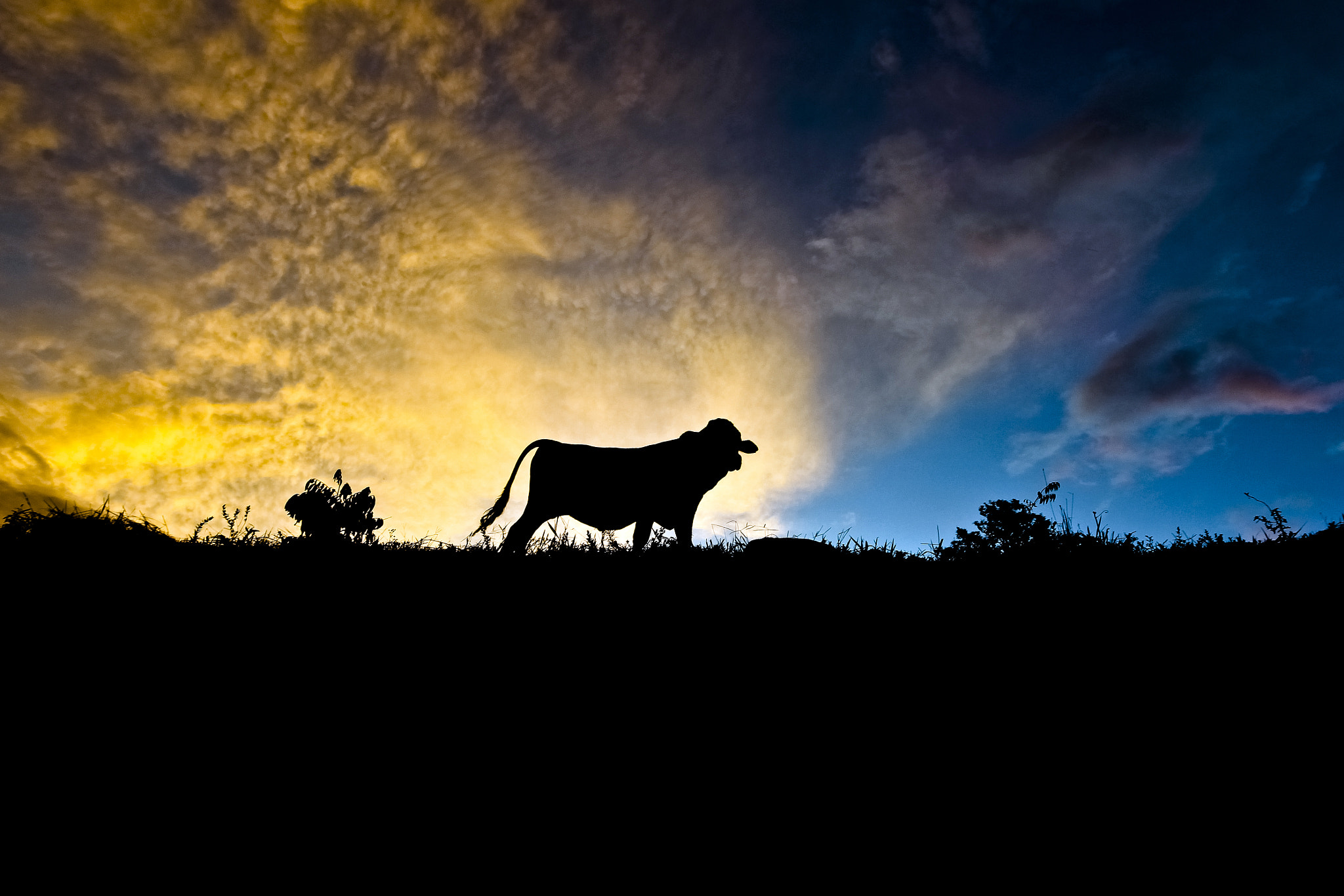 Photograph Cow and Clouds by Tiago Brandão on 500px