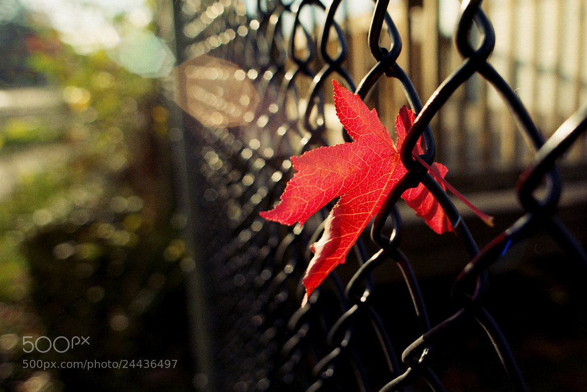Photograph The last color of last Fall by Alan  on 500px