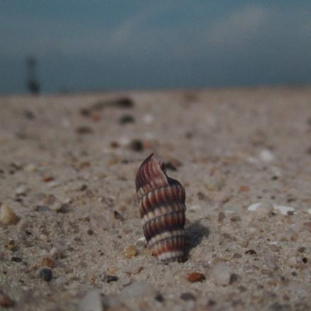 shell at beach, Canon POWERSHOT ELPH 160
