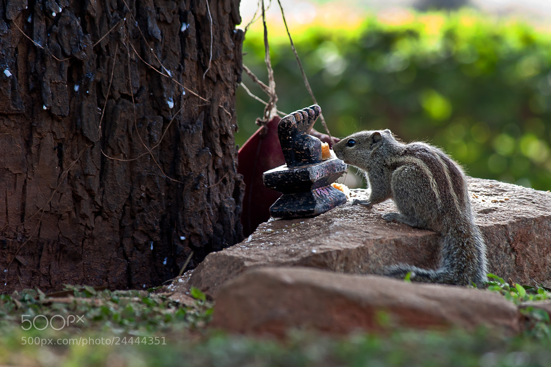 Photograph Oh God, Save Me Please!!! by Pradeep BR on 500px
