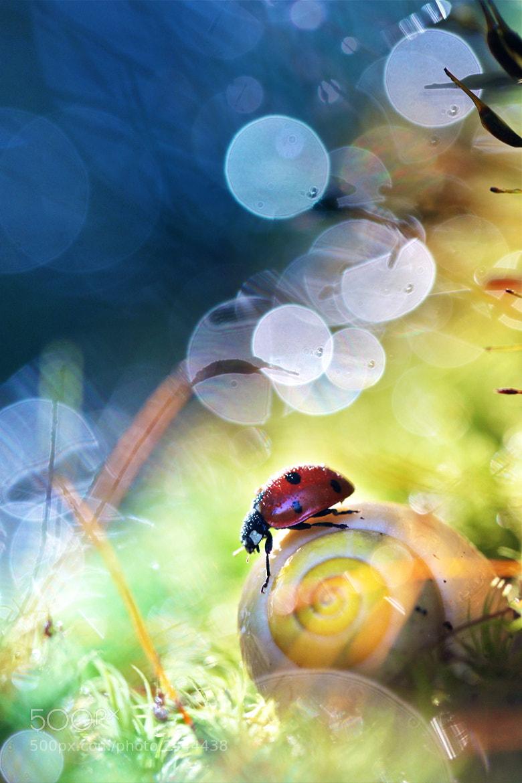 Photograph My Wonderland by Sébastien DEL GROSSO on 500px