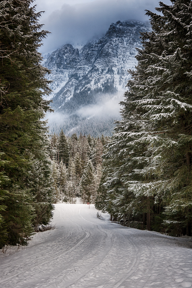 Photograph Through the Trees by Dave Gaylord on 500px