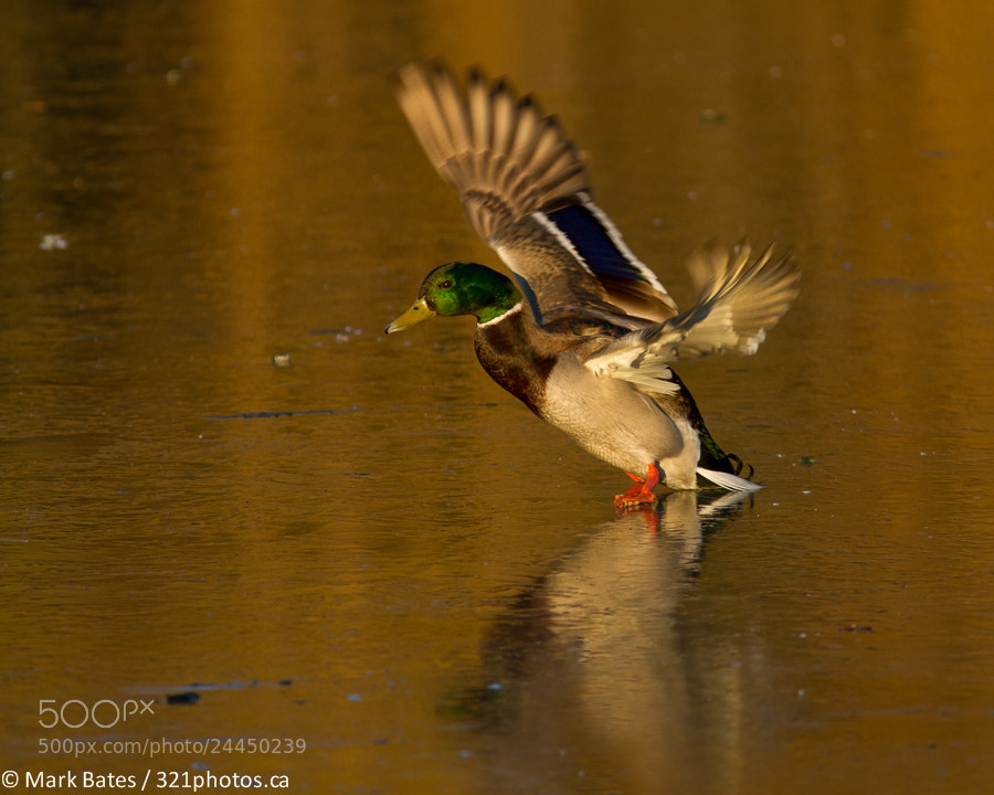 Photograph Skating Lesson by Mark Bates on 500px