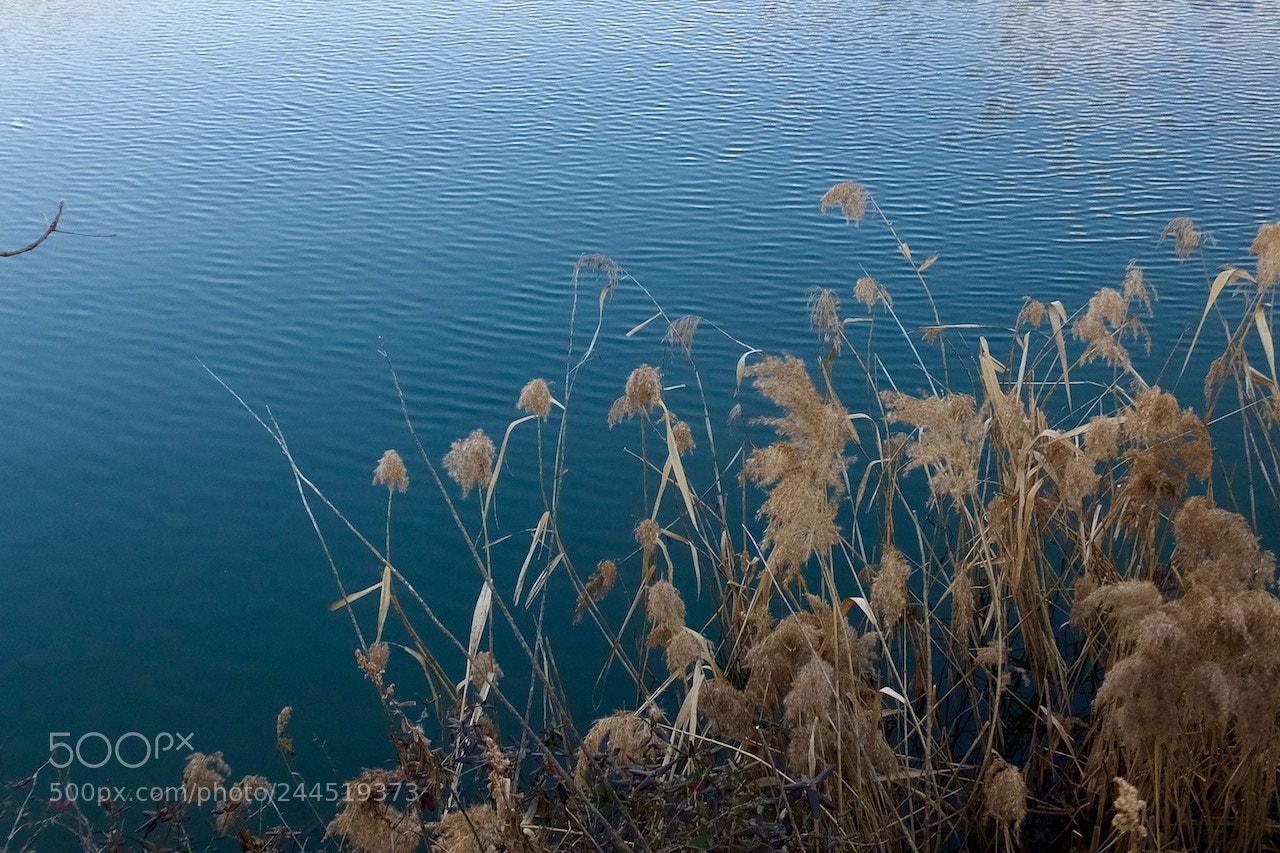 "Fujifilm FinePix F1000EXR sample photo. ""Winter pond"" photography"