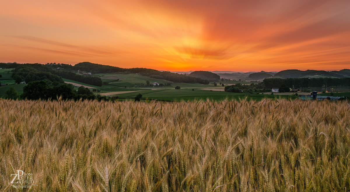 Photograph Over the wheat field by Peter Zajfrid on 500px