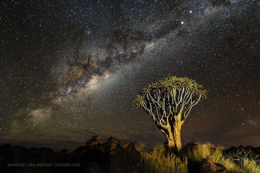 Photograph Starstruck by Marsel van Oosten on 500px