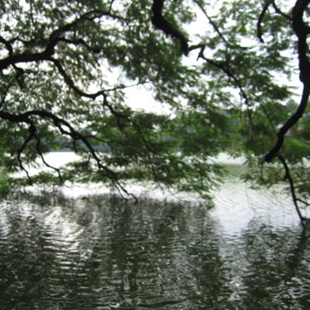 Lake, Trees, Reflection, Canon IXUS 300 HS