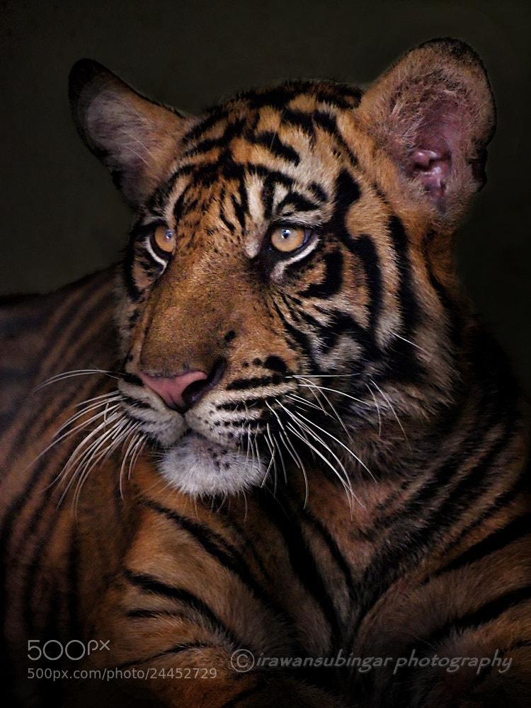 Photograph Majestic  by Irawan Subingar on 500px