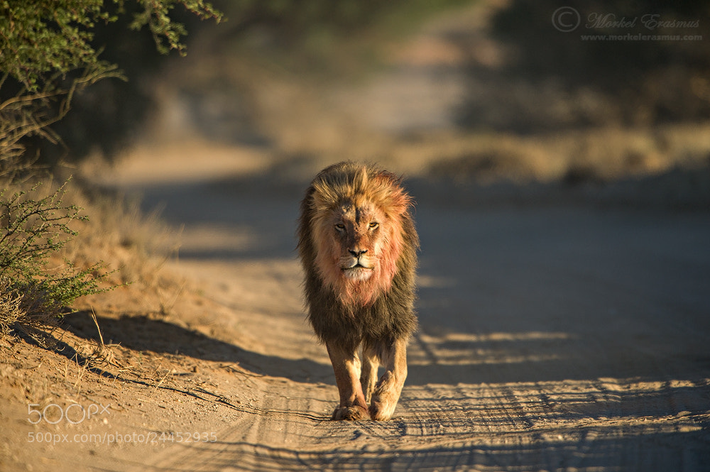 Photograph African Highway Patrol by Morkel Erasmus on 500px