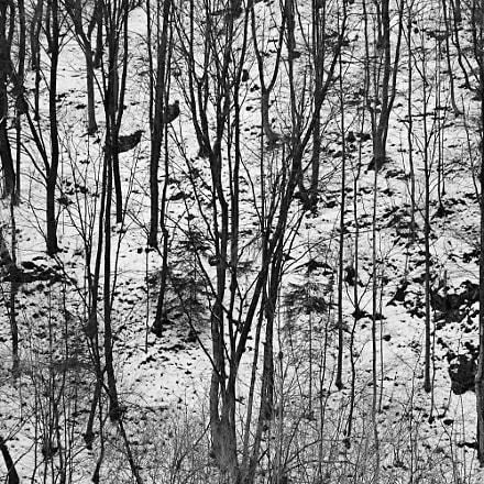 Winter Forest, RICOH PENTAX KP, HD PENTAX-DA 20-40mm F2.8-4 ED Limited DC WR
