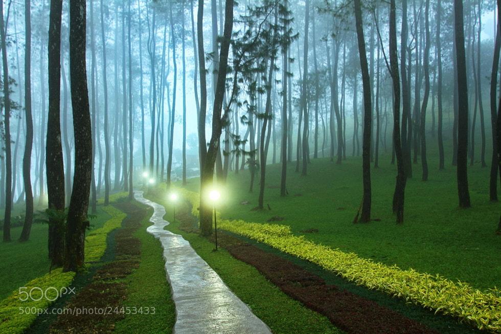 Photograph The Path by Hari Wiyadi on 500px